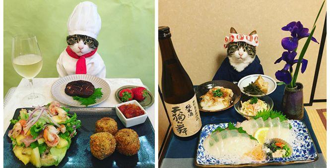 日本猫咪喜欢Cos各种角色 坐怀美食却不乱