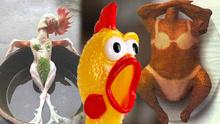鸡年鸡趣事的爆笑打开方式