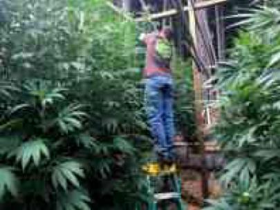 美8名议员提议放宽银行对大麻产业的限制
