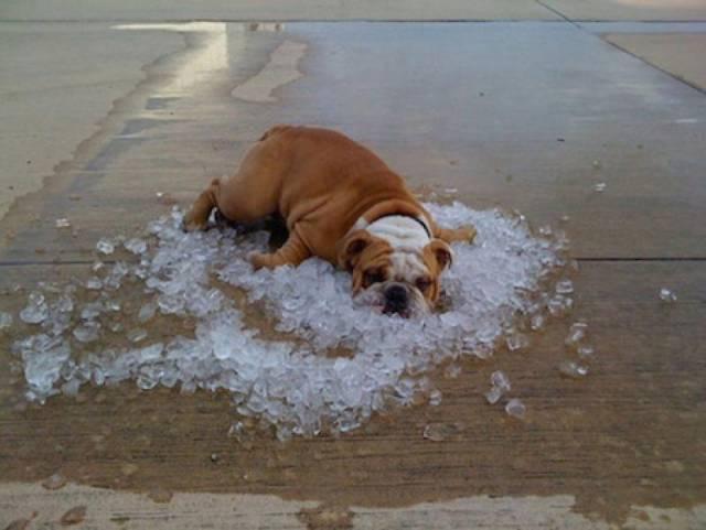 炎热的夏天到来啦!图片