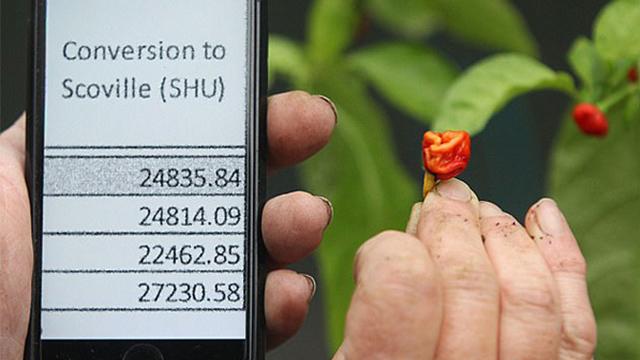 英厨师培育出世界最辣辣椒 可用作麻醉剂