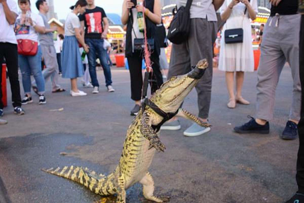 沈阳一摊主街头遛鳄鱼 制作鳄鱼肉串引围观