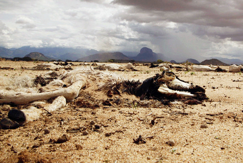 实拍干旱下的肯尼亚 干尸遍野触目惊心