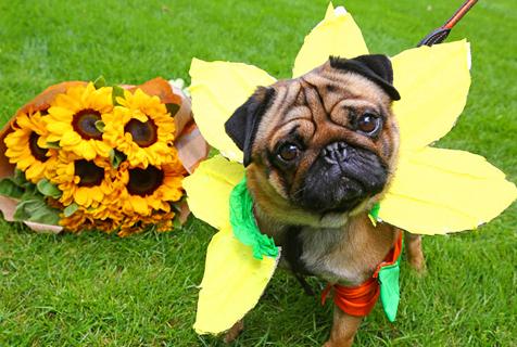 英国汪星人时尚周 比出最花哨狗狗