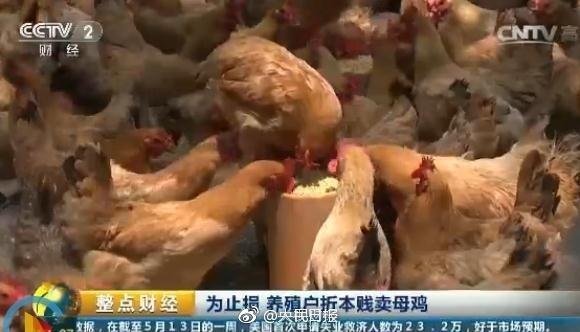 鸡蛋价格大幅下跌每斤1.9元 现在比20年前还便宜