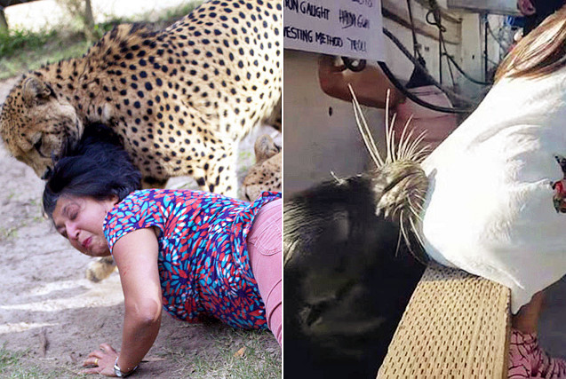 兽性大发!全球动物袭击人类的惊魂瞬间