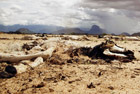 肯尼亚旱灾致干尸遍野
