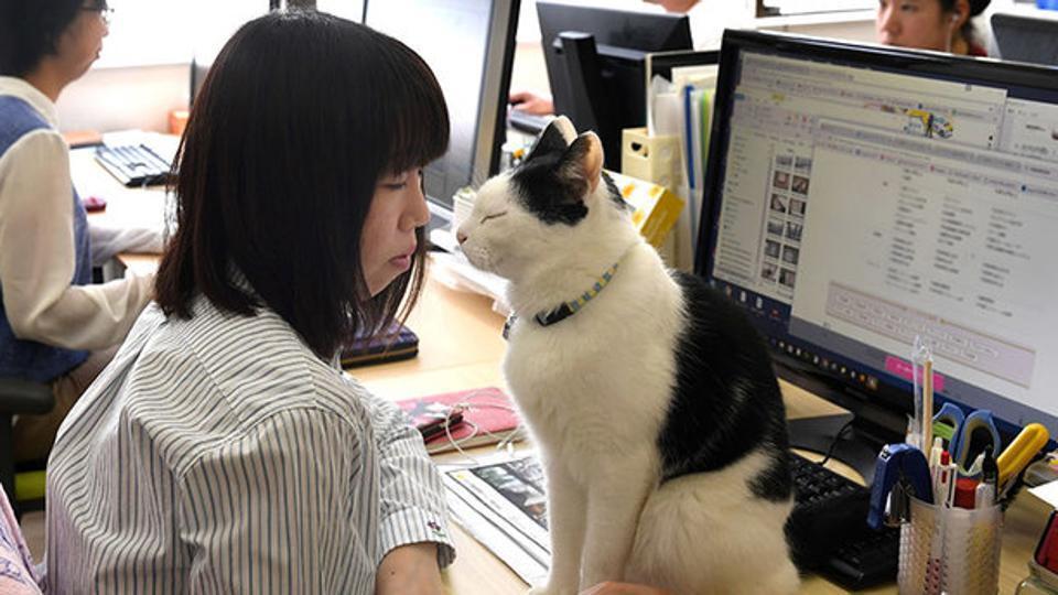 为助员工减压 日本公司允许办公室养宠物