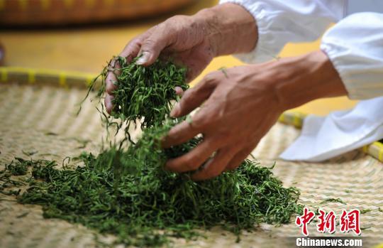 江西近60名制茶高手比拼茶叶制作技艺