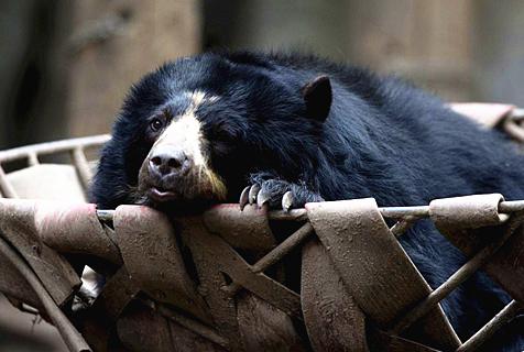 阿根廷一动物园停业后动物未获妥善安置