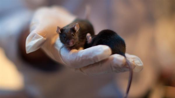 """""""太空精子""""产下的健康小鼠 堪称地表最强生物"""