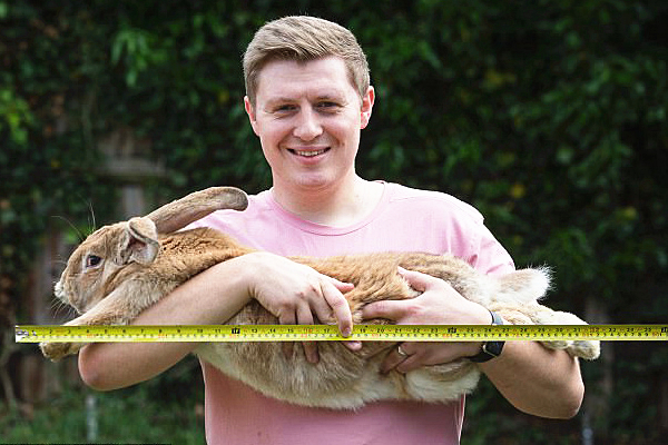 英兔子重量是新生儿三倍 或成世界第一巨兔
