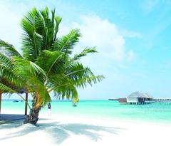 劳累和贫困交织 度假天堂马尔代夫有两张脸