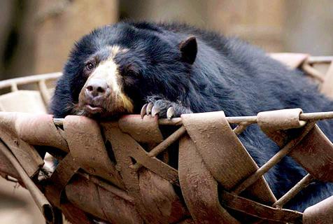 阿根廷一动物园停业后动物没人管