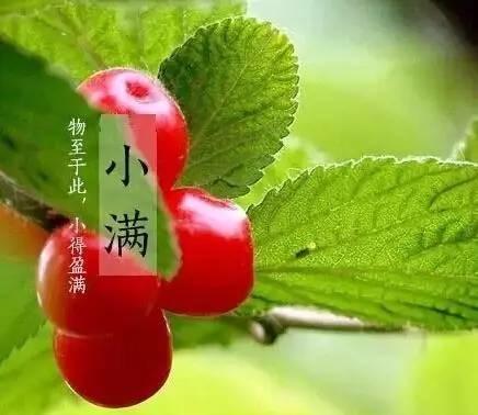 """【小满养生】吃""""苦""""尝""""鲜""""各有裨益"""