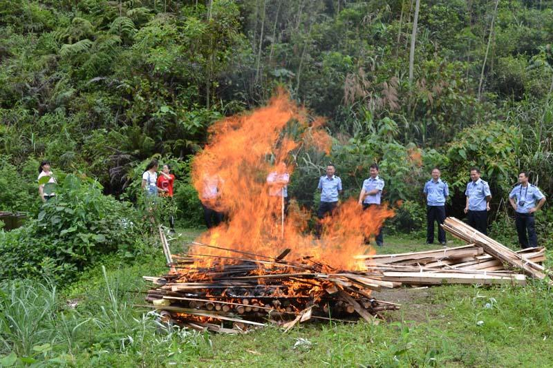 广西焚烧销毁34只涉案熊掌 价值约5万多元