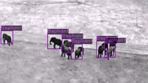 非洲南部打击偷猎竟用上了无人机和人工智能!