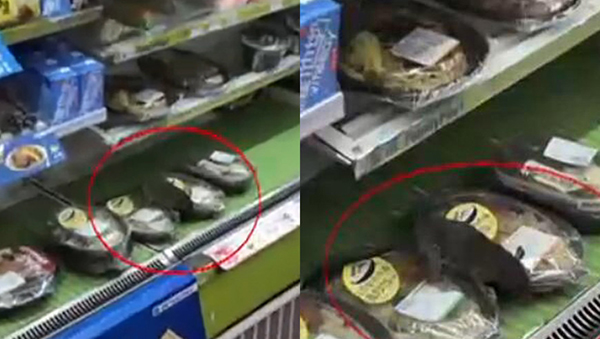 上海一便利店现大老鼠 蹲在盒饭上
