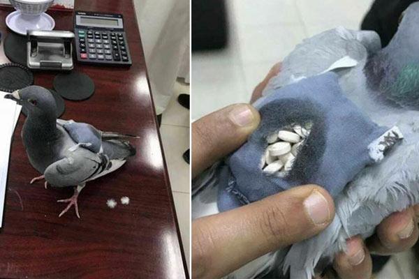 可疑信鸽背包裹被抓 包内藏178粒毒品
