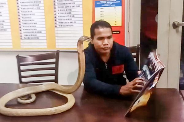 马来男子训蛇有道 把眼镜蛇养成家宠还要给它们弹琴讲故事