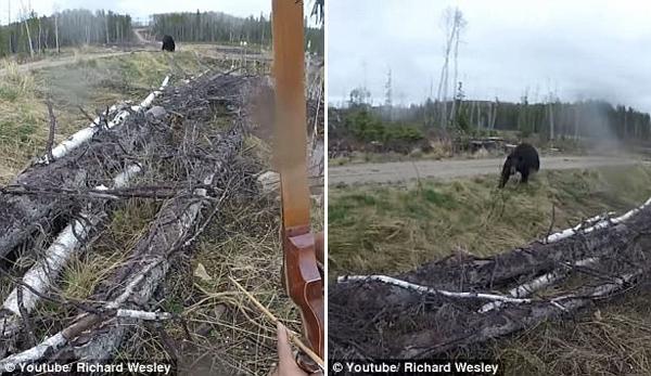 加拿大猎人遭遇黑熊袭击幸运生还