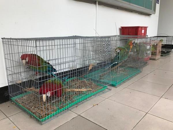 男子偷18只鹦鹉卖不掉 被吵得受不了带鸟自首