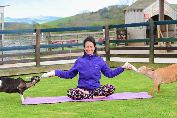 山羊瑜伽火遍欧美 体验者称很舒服