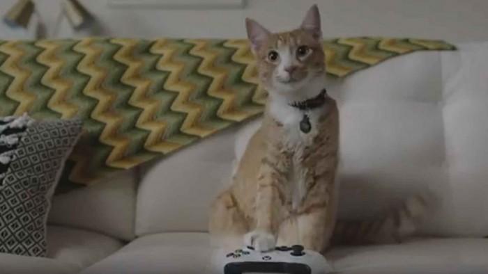 科技雷不撕:萌猫开挂:微软推直播服务Mixer