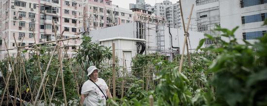 探秘香港屋顶农场 在寸土寸金的时代算是一股清流