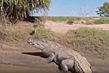 澳渔夫惊扰五米巨鳄遭追逐