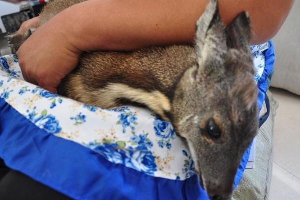 村民起床后在家发现国家一级保护动物