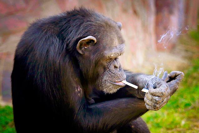 """世界无烟日 看动物界""""烟鬼""""吞云吐雾"""