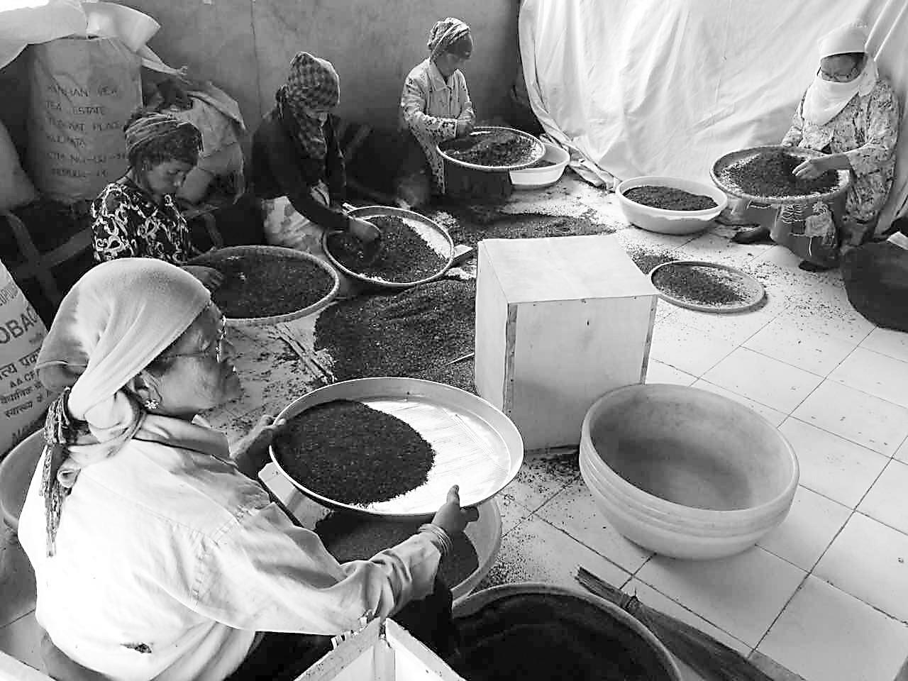 在 印度的鸡脖 探访大吉岭红茶