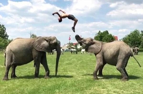 """技艺了得!匈牙利马戏团演员""""与象共舞""""惊艳众人"""