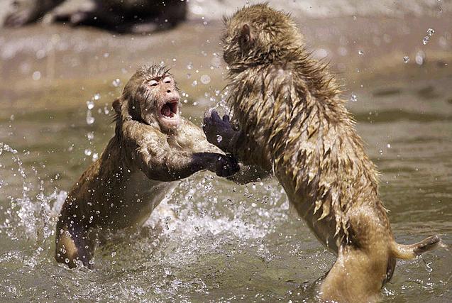 """日本两""""泼猴""""嬉水打闹 超顽皮"""