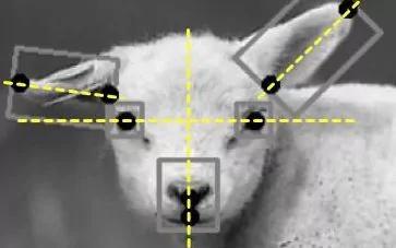 要逆天!人工智能还能识别动物的情绪了