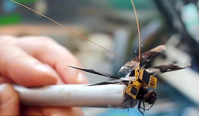 """蜻蜓背上安装电子""""小书包""""化身间谍机器小虫"""