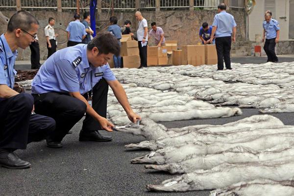 广东海关查获1492条貂皮 涉案金额约700万
