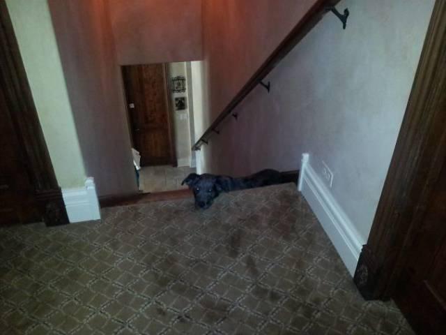主人说脚不能放沙发和地毯上图片