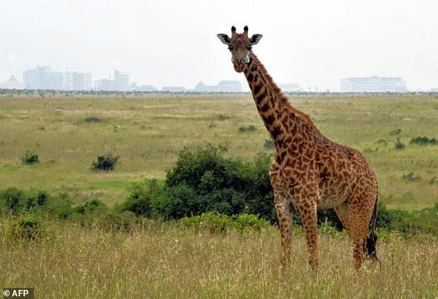 专家警告:全球第六次物种大灭绝或将到来