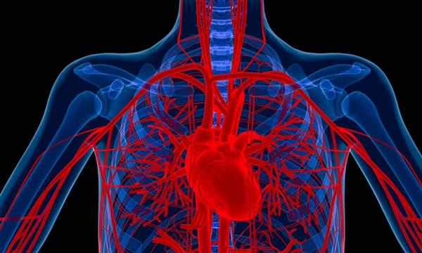 大突破:最强心脏起搏器 微波供电 可直入心脏