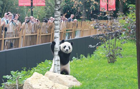 """大熊猫""""武雯""""、""""星雅""""中国端午节在荷兰亮相"""