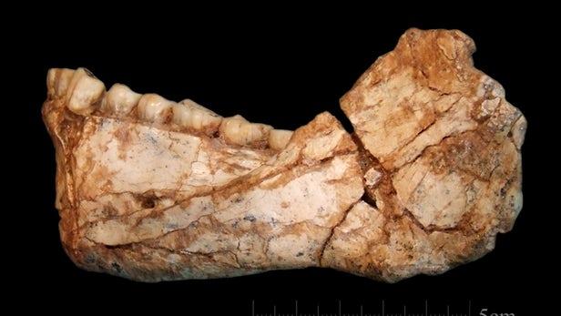 最早智人化石在摩洛哥出土