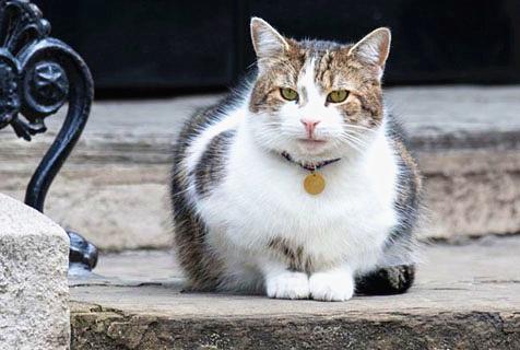 """英大选投票启动 """"御猫""""静待新主人"""