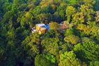 夫妇买荒地种出热带雨林