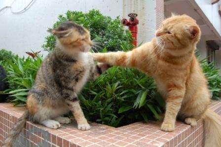 来啊!互相伤害啊图片