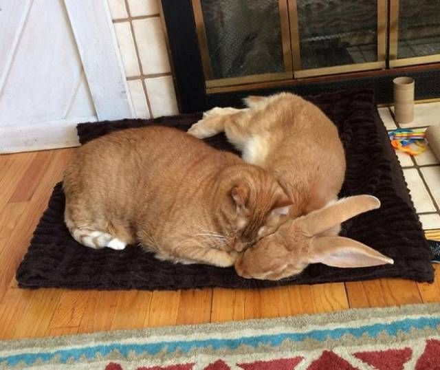 暖心!相亲相爱的动物们图片
