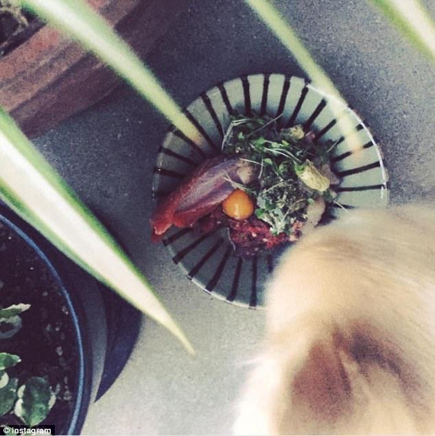 吃得比人好!宠物们的豪华餐食图片