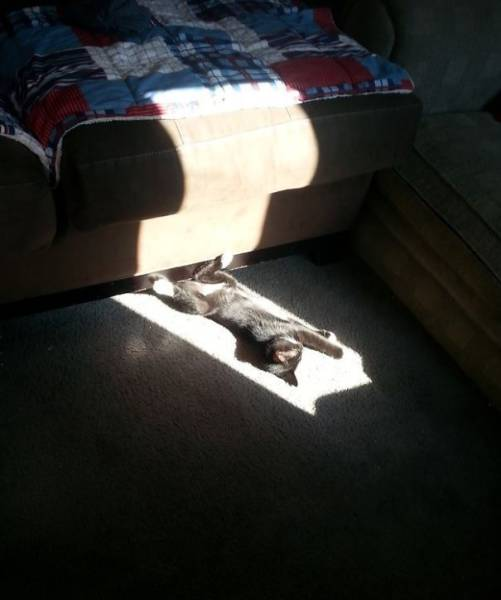我是一只爱晒太阳的猫图片