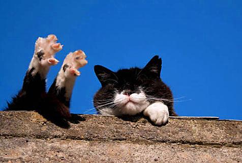我是一只爱晒太阳的猫